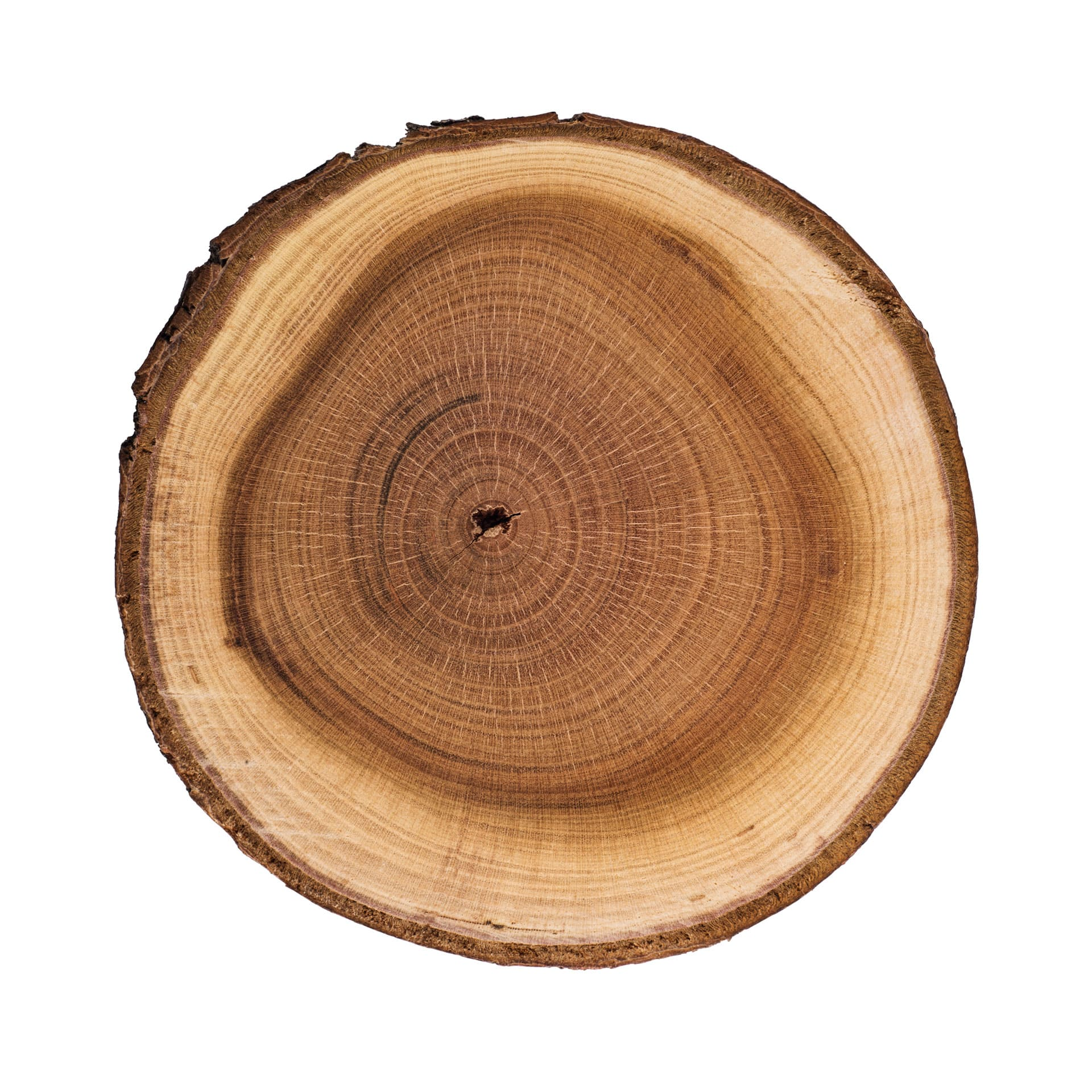 Interior árbol