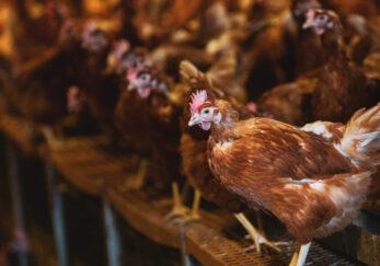 EcoBranding como solución a los desafíos de la industria agroalimentaria